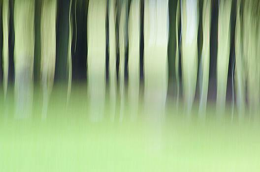 Wildermist by Jeff Mize