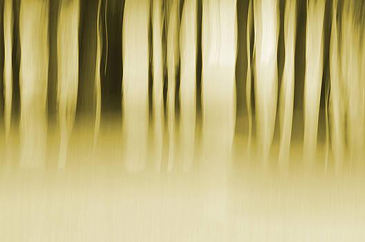 Wildermist Morning by Jeff Mize