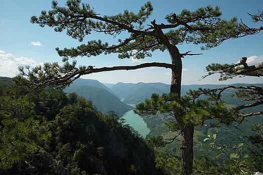 Wilderness by Dejan Dizdar