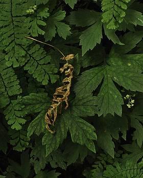 Charles Lucas - Wilderness Flora