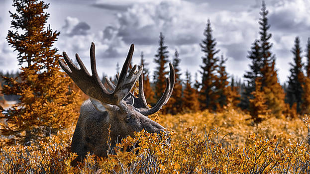 Wilderness by Garett Gabriel