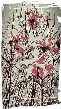 Wilderness Lilies by Amanda Romer