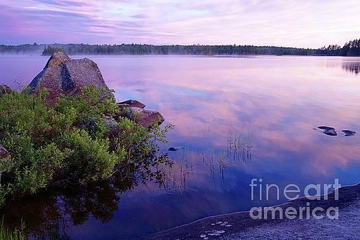 Wilderness Morning Beauty by Sandra Updyke