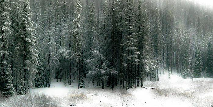 Wilderness Snowfall by Athena Mckinzie