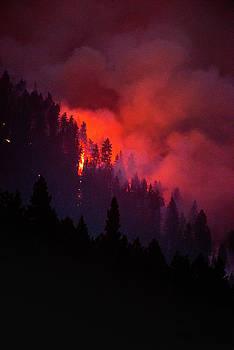 Wildfire by Joy McAdams
