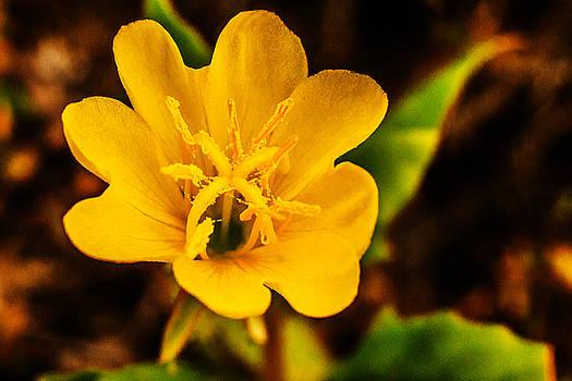 Barry Jones - Wildflower - 1