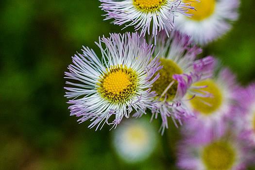 Barry Jones - Wildflower 2 - Horizontal