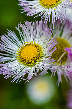 Wildflower 2 - Vertical  by Barry Jones