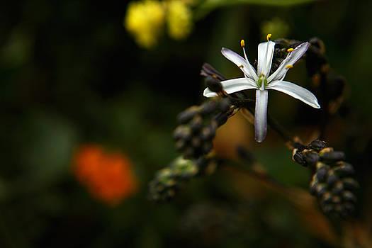 Wildflower at Mavericks Beach No. 1 by Lon Casler Bixby