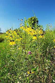 Wildflower Bouquet by Amanda Kiplinger