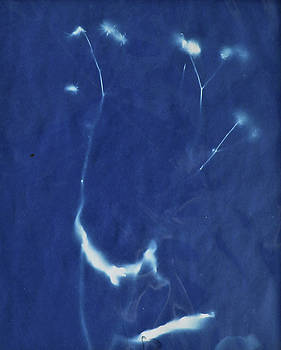Wildflower cyanotype by Lisa Shea