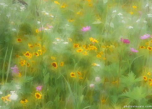 Wildflower Dreams by David Hutchison