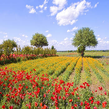 Wildflower Farm by Bonnie Barry