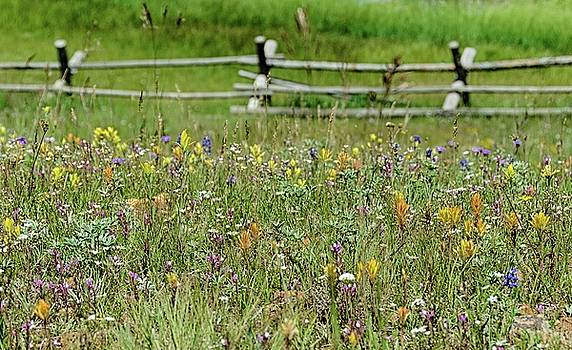 Wildflower fence by Gaelyn Olmsted