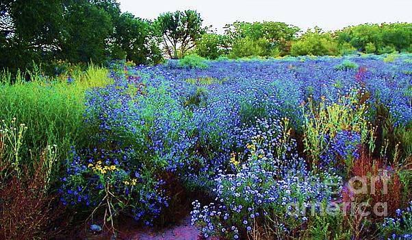Wildflower Field Around Santa Fe by Diana Dearen