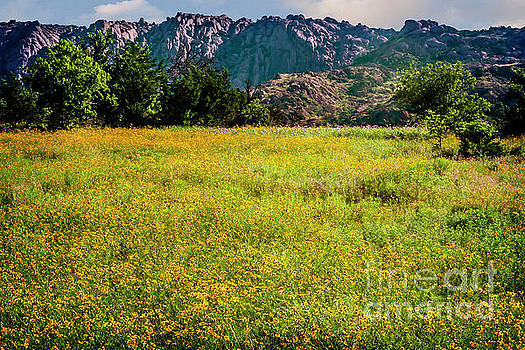 Wildflower Field in the Wichita Mountains by Tamyra Ayles