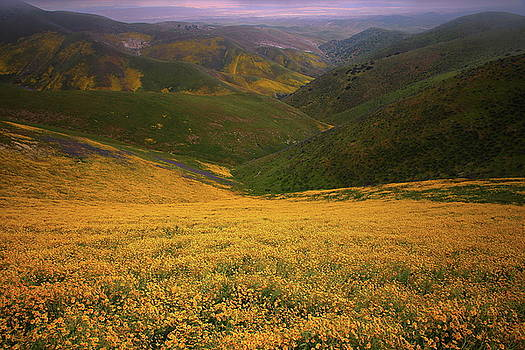 Wildflower field up in the Temblor Range at Carrizo Plain National Monument by Jetson Nguyen