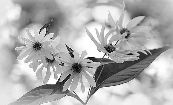 Rosanne Jordan - Wildflower Glow