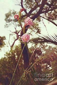 Wildflower I by Cassandra Buckley