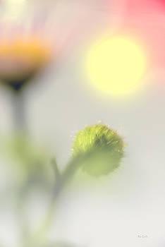 Wildflower Impressions Sunrise by Bob Orsillo