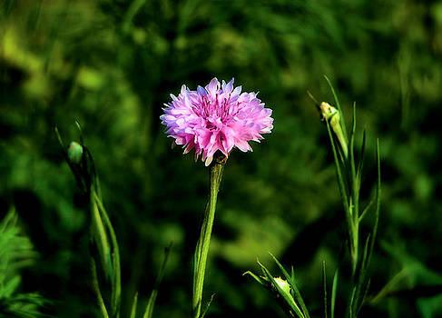 Karen Scovill - Wildflower