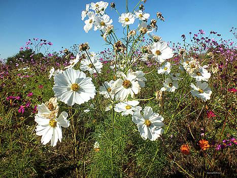 Wildflower Mania by Hannah Underhill