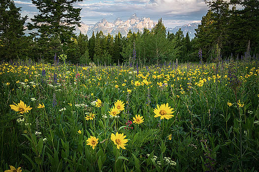 Wildflower Meadow in the Tetons by James Udall
