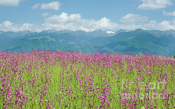 Wildflower Meadows and the Carpathian Mountains, Romania by Perry Rodriguez