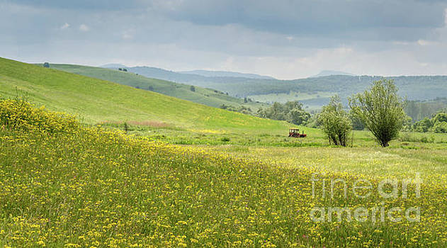 Wildflower Meadows, Transylvania by Perry Rodriguez