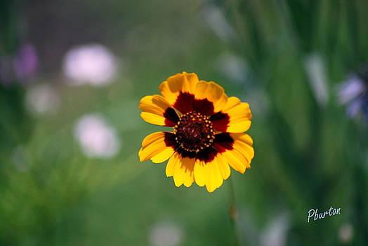 Wildflower by Phil Burton