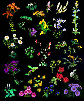 Wildflower Quilt by Diana Ludwig