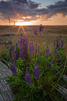 Wildflower Sundown by ChrisAntoniniPhotography