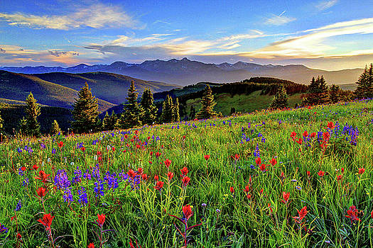 Wildflower Sunset Hill by Scott Mahon