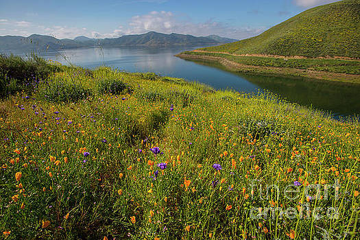 Wildflower Superbloom 8 by Daniel Knighton