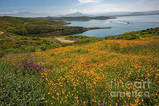 Wildflower Superbloom 9 by Daniel Knighton