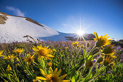 Wildflower Wonder by Cole Golphenee