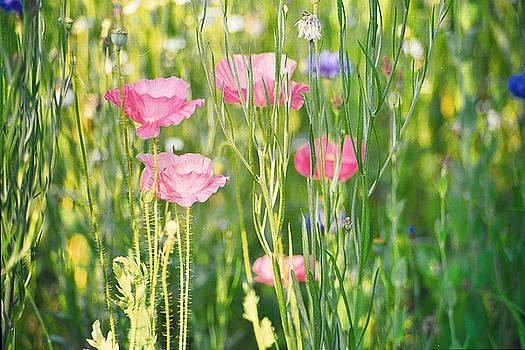 Edward Sobuta - Wildflowers 2
