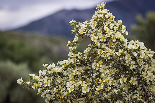 Scott Harris - Wildflowers 2