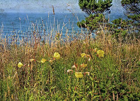 Thom Zehrfeld - Wildflowers Above The Sea