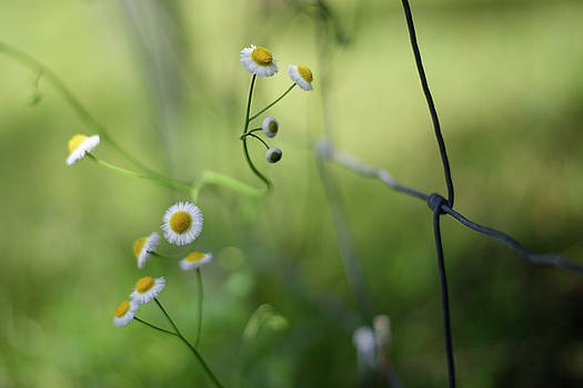 Wildflowers Along A Country Road by Laura Fasulo