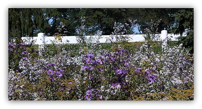 Rosanne Jordan - Wildflowers Along the Fence