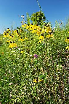 Wildflowers by Amanda Kiplinger