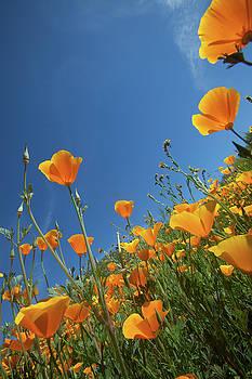 Cliff Wassmann - Wildflowers and Blue Sky