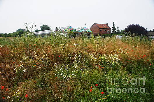 Wildflowers and farmhouse by Therese Alcorn