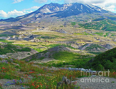 Wildflowers and Mt. St, Helens by Ansel Price
