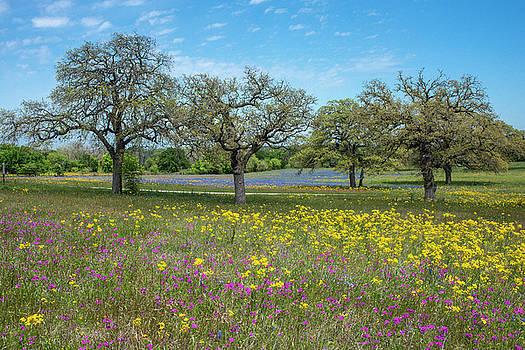 Billy Moore - Wildflowers and Oak Trees 1