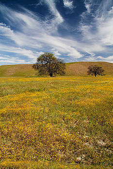 Roger Mullenhour - Wildflowers and Oak Trees