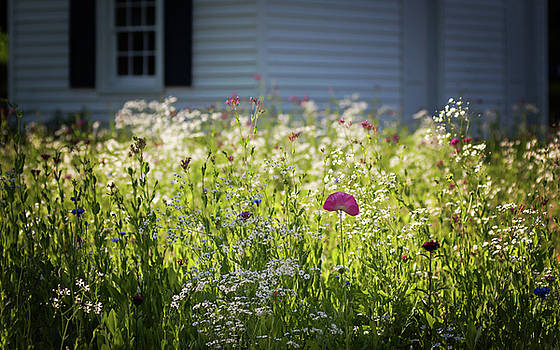 Terry DeLuco - Wildflowers and Pink Poppy Sunshine