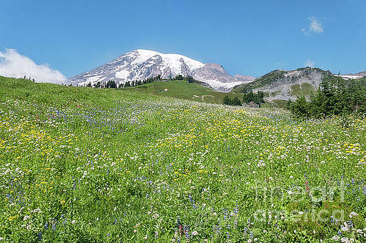 Wildflowers and Rainier by Sharon Seaward