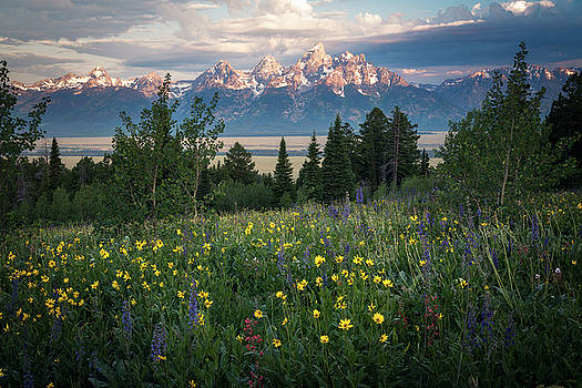 Wildflowers at Grand Teton National Park by James Udall